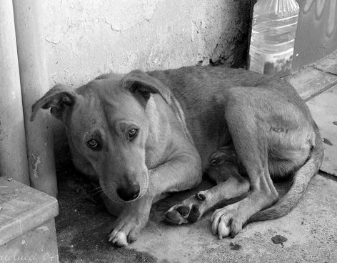 SIGAMOS EL EJEMPLO, EN TIJUANA CREAN UNIDAD POLICIACA PARA REPORTAR EL MALTRATO ANIMAL
