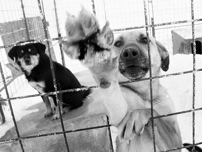 PRESENTAN INICIATIVA DE LEY DE PROTECCIÓN A LOS ANIMALES EN ZACATECAS