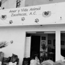 PRIÍSTAS AGREDEN A VOLUNTARIA DE LA ASOCIACIÓN AMOR Y VIDA ANIMAL