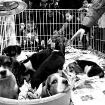 HASTA 8 MIL PESOS DE MULTA A NEGOCIOS QUE VENDAN ANIMALES