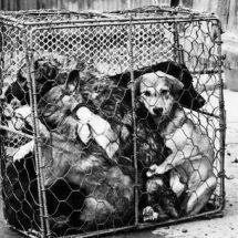PIDEN CAMPAÑA ESTATAL PARA EVITAR VENTA ILEGAL DE ANIMALES