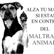 ESTE DOMINGO, MARCHA CONTRA MALTRATO ANIMAL CON WALKING DOG