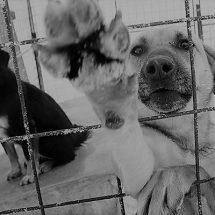 ZACATECAS BUSCA SANCIONAR CONDUCTAS DE CRUELDAD ANIMAL