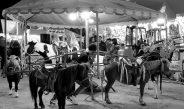 DENUNCIAN MALTRATO ANIMAL EN LA FENAZA 2018