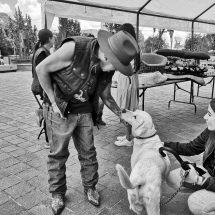 SIGUEN LAS ADOPCIONES EN EL MASCOTA FEST
