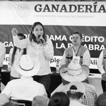 PRODUCTORES AFECTADOS POR LA SEQUÍA RECIBEN APOYOS DEL GOBIERNO DE MÉXICO