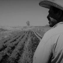 PEQUEÑOS PRODUCTORES GENERAN 40% DE ALIMENTOS EN MÉXICO